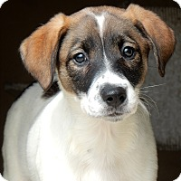 Adopt A Pet :: Janet - Long Beach, NY