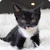 Adopt A Pet :: Destinee - Wayne, NJ