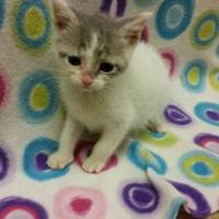 Adopt A Pet :: Tiny - Benton, KY