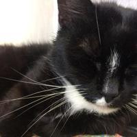 Adopt A Pet :: Aldwin - Calais, ME