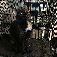 Adopt A Pet :: Jasmine - Stroudsburg, PA