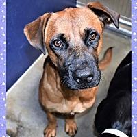 Adopt A Pet :: Riley - San Jacinto, CA