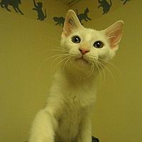 Adopt A Pet :: Enzo - Milwaukee, WI