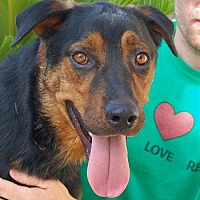 Adopt A Pet :: Heathcliff - Las Vegas, NV