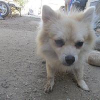 Adopt A Pet :: SMORES - Porterville, CA