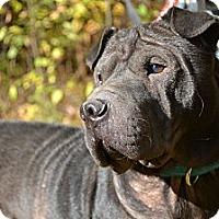 Adopt A Pet :: Sampson - Newport, VT