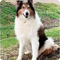 Adopt A Pet :: Heath - San Diego, CA