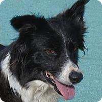 Adopt A Pet :: Winnie - Monrovia, CA