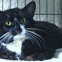Adopt A Pet :: Magnus the Great - Brooklyn, NY