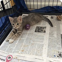Adopt A Pet :: Lilo - San Ramon, CA