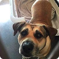 Adopt A Pet :: Madalaine - Phoenix, AZ