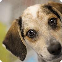Adopt A Pet :: Derby - Minneapolis, MN