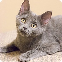 Adopt A Pet :: Aaron Purr - Chicago, IL