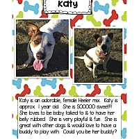 Adopt A Pet :: Katy - Graford, TX