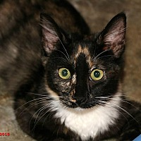 Adopt A Pet :: Allie - Encino, CA