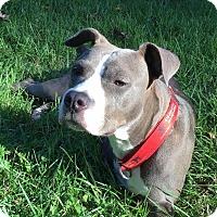 Adopt A Pet :: Carli - Atlanta, GA