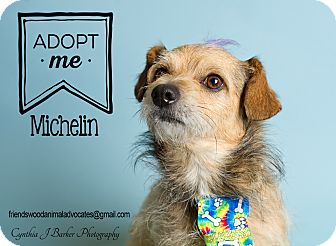 Terrier (Unknown Type, Small) Mix Dog for adoption in Friendswood, Texas - Michelin