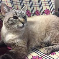 Adopt A Pet :: Mouthy - Wellsville, NY
