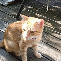 Adopt A Pet :: Sydney - Troy, IL