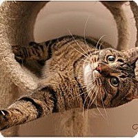 Adopt A Pet :: Tina - Sterling Heights, MI