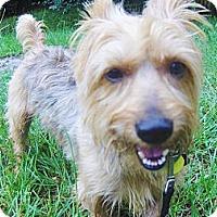 Adopt A Pet :: Banks - Jacksonville, FL