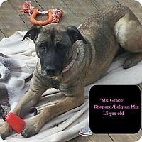 Adopt A Pet :: GRACE - MAIDEN, NC