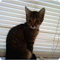 Adopt A Pet :: Ella - Greenville, SC