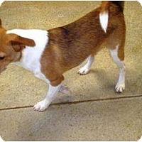 Adopt A Pet :: Puppy 4 - Irvington, KY