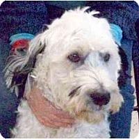 Adopt A Pet :: Sweet Boy! - kennebunkport, ME
