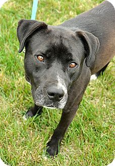 Labrador Retriever Mix Dog for adoption in Fort Leavenworth, Kansas - Marshall