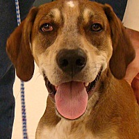Adopt A Pet :: Copper - Rosalia, KS