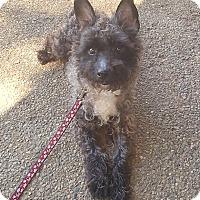 Adopt A Pet :: Jack - Davison, MI