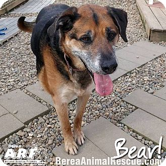 Shepherd (Unknown Type) Mix Dog for adoption in Berea, Ohio - Bear