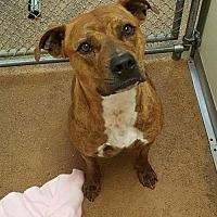 Adopt A Pet :: Skylar - Centerburg, OH