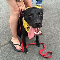 Labrador Retriever Mix Dog for adoption in Goldsboro, North Carolina - Duke