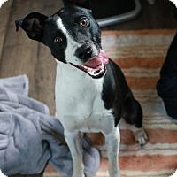 Adopt A Pet :: Kaine - Portage, MI