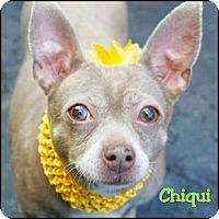 Adopt A Pet :: Chiqui - Oakland Gardens, NY