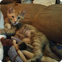 Adopt A Pet :: Chassy - Corinne, UT