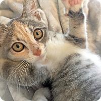 Adopt A Pet :: Maeve17 - Youngsville, NC