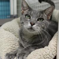 Adopt A Pet :: Bonnie Rae - Suwanee, GA