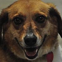 Adopt A Pet :: Parker - Osage Beach, MO