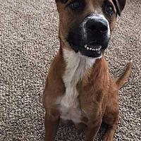 Adopt A Pet :: Charm / Foxy Roxy - Raleigh, NC