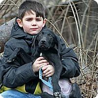 Adopt A Pet :: Rowdy - Spring City, PA