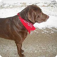 Adopt A Pet :: Ernie - Saskatoon, SK