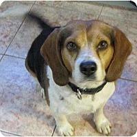 Adopt A Pet :: Mylo - Rigaud, QC
