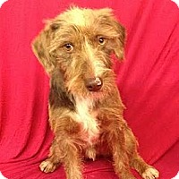 Adopt A Pet :: Lugnut - Courtesy Posting - New Canaan, CT