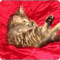 Adopt A Pet :: Thumbelina (and Wuss - Syracuse, NY