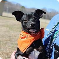 Adopt A Pet :: Seamus - Brattleboro, VT