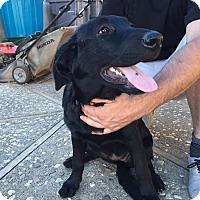 Adopt A Pet :: Daisy - Woodland, CA
