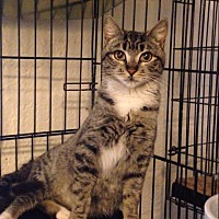 Adopt A Pet :: Faith - Scottsdale, AZ
